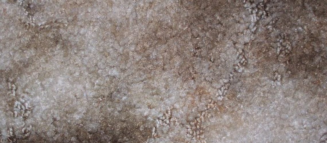 four-disgusting-things-that-love-your-dirty-carpets-38